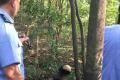 六旬老人患病后离家出走 14天后遗体在树林发现