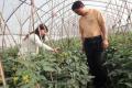 """5·30全国科技工作者日︱游艳华:与蔬菜对话 当好田间地头""""女郎中"""""""